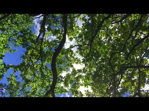 Branches with green leaves. Ветки с зелёными листьями.