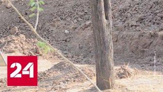 Хорошо спрятался: интернет-пользователи пытаются найти леопарда на фото - Россия 24