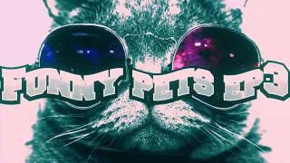 Веселые домашние животные (коты) ep3 - Funny pets (cats) ep3