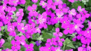 Har Ghadi Bekhudi [Full Song] (HD) With Lyrics   - YouTube
