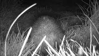 Wildlife Trail Camera - 19.4.2019