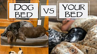 Should You Let Your Dog Sleep With You? - You Ask We Answer Episode 17: Part 2