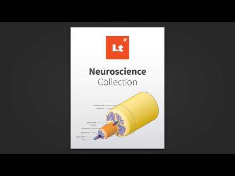 Lt - Online Learning Platform   Neuroscience Collection - YouTube