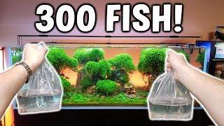 Adding 300 FISH! To Ancient Gardens Planted Aquarium