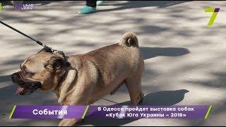 В Одессе пройдет выставка собак «Кубок Юга Украины – 2018»