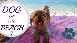 На Плаж С Куче - ЧАСТ 2/Ася Енева/Dog On The Beach - PART 2/Asya Eneva