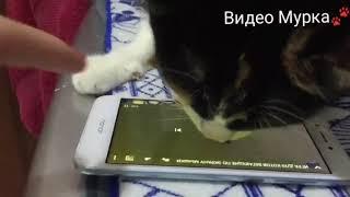 Кошка мурчит и ловит мышей в телефоне! Смешное видео)