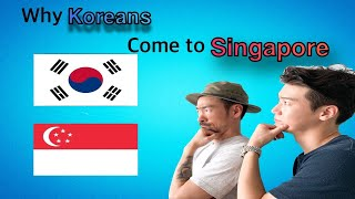 Why Koreans come to Singapore?