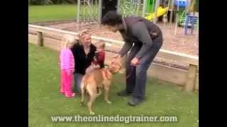 How To Approach A Dog