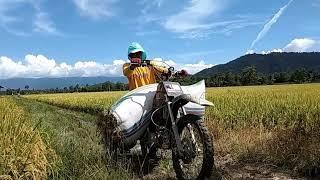 preview picture of video 'Petani Muda Tomoni Timur'