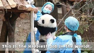 This Is The Happiest Job In The World! | iPanda