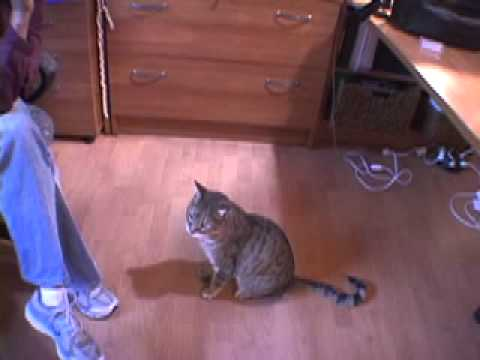 Teaching a Cat to Be Quiet