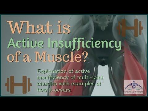 La structure des muscles du livre