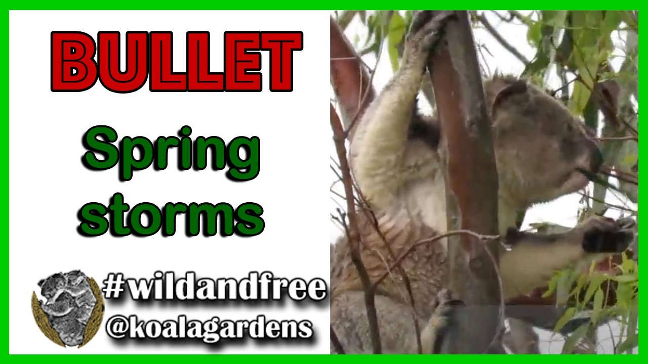 Bullet in a spring storm