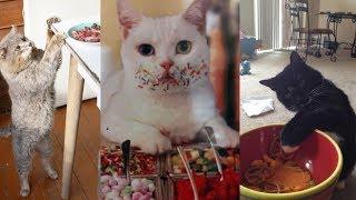 ДЕРЖИ ВОРА!)))  Смешные животные воришки!   Funny pets are thieves!