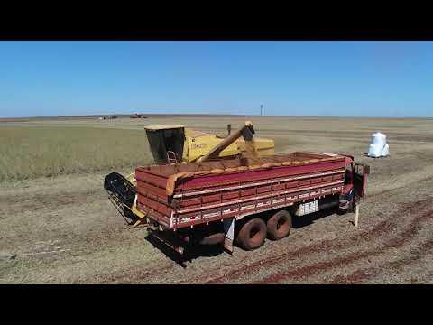 Opções de seguros para os produtores rurais