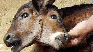 10 ANIMALES MÁS DIFERENTES DEL MUNDO
