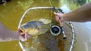 Found the Honey Hole!! Sight Fishing Carp on the Fly