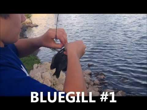 Mangler Lures: BASS-N-BLUEGILL Fishing (4 Pound Bass)