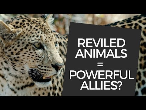 Reviled animals could be our powerful allies