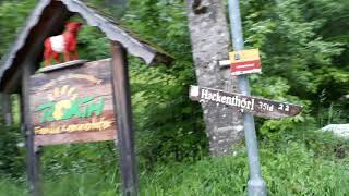 Live-Video: Dauerregen im Forststraßen-Labyrinth