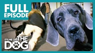 The Great Dane 'Villian': Dylan | Full Episode | It's Me or the Dog