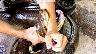 Anaconda Attack : SnakeBytesTV