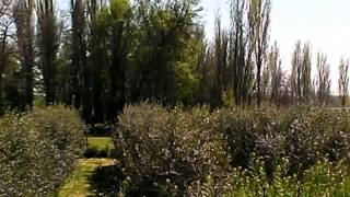 Video del alojamiento La Casa del Molino