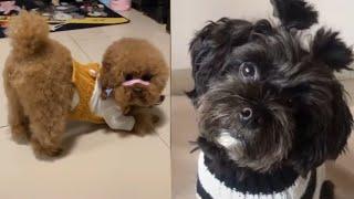 Meilleures Vidéos Drôles de Chat et de Chien 🐶🐱- Best Funny DOGS et CATS #148