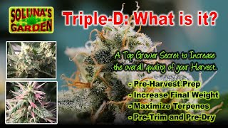 Top Grower SECRET: 'Triple-D' (How to Achieve Max Potency and Terpenes.)