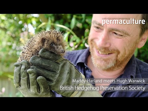 Help Save the British Hedgehog