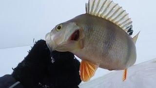Ловля рыбы зимой на ильмене