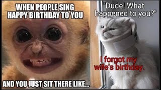 Dozens Of Hilarious Birthday Memes With Animals