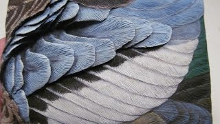 Bluewinged Teal Drake Wing  Painting In Acrylics Demo  Part 9