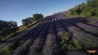 Lavander fields FPV