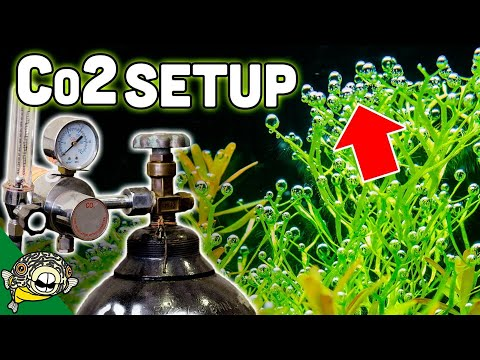 How To Set Up Aquarium Co2 System – The EASY Way