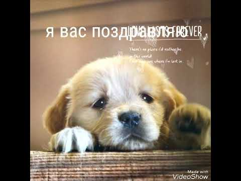 Гороскоп скорпион собака на сентябрь 2016