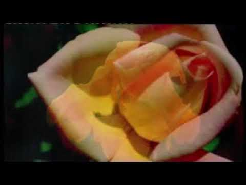 Al'amarin so video song | Nura M. Inuwa
