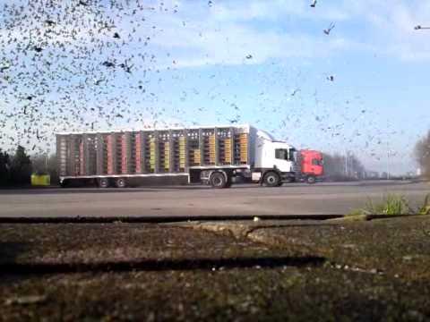 Lossen van de duiven te Gennep op 3 april 2010