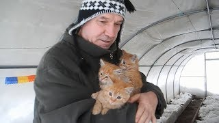 Выживут ли котята на морозе
