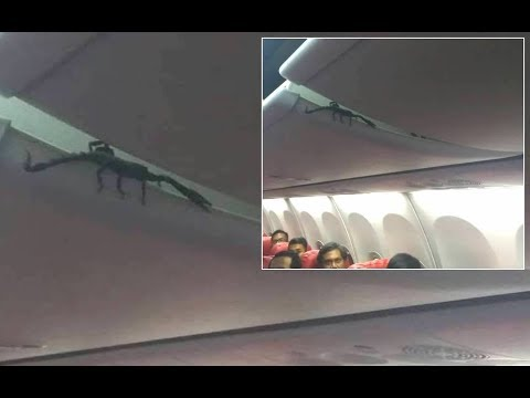 Скорпион на борту самолета