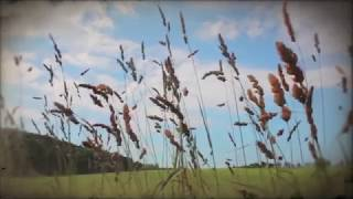Wolfgang Lederer – Dreaming (Official Music Video)