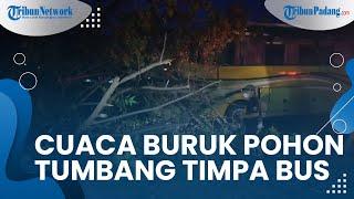 Cuaca Buruk di Kota Padang akibatkan Pohon Tumbang hingga Timpa Bus, Beruntung Tak Ada Korban Jiwa