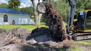 Large Stump Removal/The Tree Planters/Serving Central Florida for 50 Years
