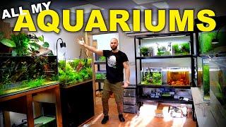 HUGE Fish Room Tour!! 49 Aquariums 2x Studios & Feeding (must see!!) | MD Fish Tanks