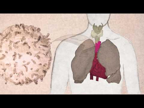 Papillomavírus vakcina vírus