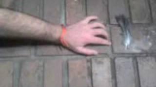 La main à la plume - Pepperland laid waste