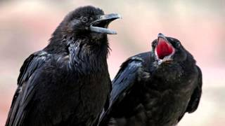 Medicine Crow - Native American Music, Shamanic Music