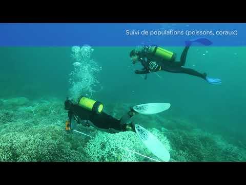 Retour sur le programme gestion durable et de préservation du patrimoine naturel marin de Mayotte et des îles Eparses