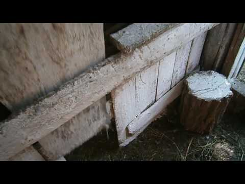 Кал на лямблии омск
